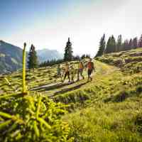 At the end of the day the hike is nearly finished © Tourismusverband Saalbach Hinterglemm